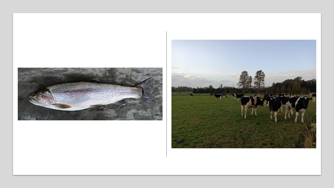 Iniciativas buscan dar respuestas a problemáticas de los sectores acuícola y agroalimentario